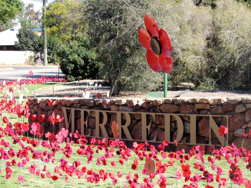 Merredin Field of Poppies